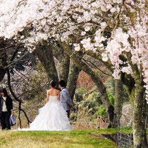 桜花と花ふたつ(山王寺)