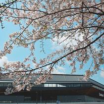 さくらとスタジアム(京都スタジアム)