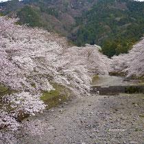 七谷川の春