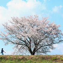 ママと散歩(大井町並河)