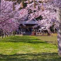 HARUKAZE(若宮神社)