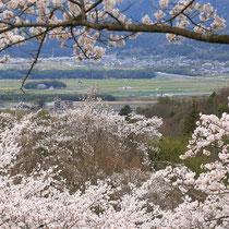 里にも春(平和台公園)