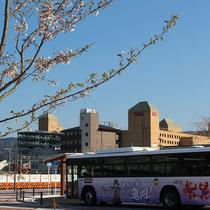 桜と共に育つ亀岡(JR亀岡駅北口)