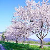 贅沢な散歩道(保津川河川敷周辺)