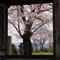 古寺の桜(丹波国分寺跡)