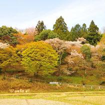 里山の春(那須与一堂)