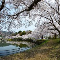 春の散策路