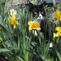 Весна, цветы, апрельские коты))))