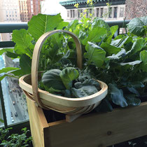 """Sussex trug...the most stylish way to carry my harvest from """"Balcony to Table""""."""