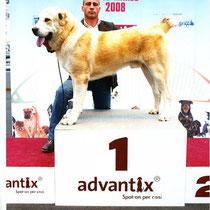 Expo Internazionale di Reggio Emilia 2008 - Melgun consegue il Migliore di Razza BOB dalla classe Giovani