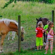 Unsere Nachbarn: Die Pferde und Pony auf der großen Wiese hinter den Blockhäusern © www.zweiseen.de
