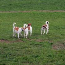 Watson, Kabou, Ayko