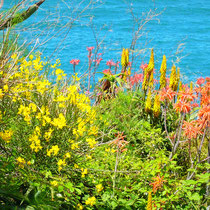 Cap BEAR  © Tous droits réservés - Crédit photo Mr Claude BIHAIN