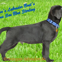 Blue Sterling von Bernice & Brut