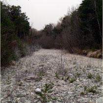 Pfynwald 02.01.2014