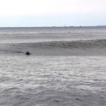Robben am Surfen