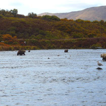 the Kodiak Bears are in position.