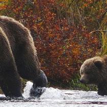 Die Bärenmamma mit ihrem Jungen