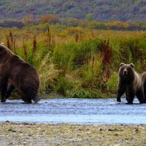 Bärenmutter mit Babys