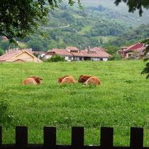 Panes, Asturia - grüne Landschaft des Nordens