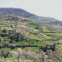 hängende Gärten im Tal El Valle del Jerte