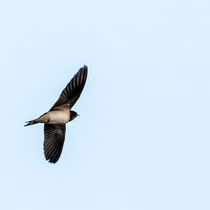 schon ist der Elternvogel wieder hoch oben in der Luft