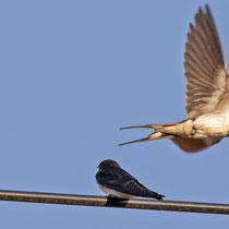 der Elternvogel fliegt fort