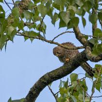 dabei beugt sie sich herunter um nach ihm, der etwas tiefer am Baumstamm sitzt, zu rufen.