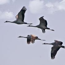 vier Flieger