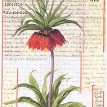 fleur (33 x 21 cm)