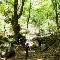 新緑の木漏れ日で、広くて明るい谷です