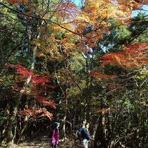紅葉の下を下山