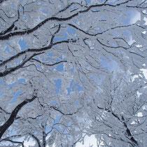 枝先の樹氷が全部残っていた
