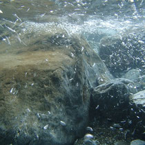 きれいな丹生川の水の中