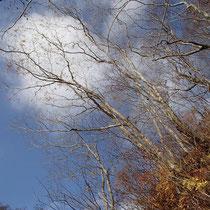 木々の葉っぱはほぼ落ちてしまってました