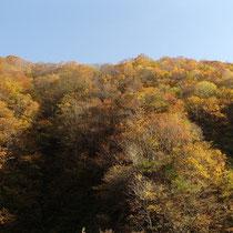 駐車場から国道までの山々の紅葉がきれいでした