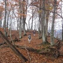 オクスゲノ池周辺の落ち葉のジュータンを踏んで。