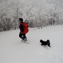 山頂で元気な子犬に出会った