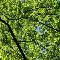 新緑の木漏れ日の下でしばし休憩