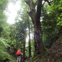 本日最初のトラスト木に接近