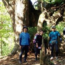 登り切ったところで、杉の巨木がお出迎え