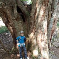 巨木との出合いで感動です