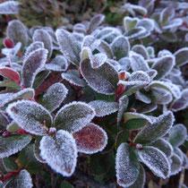 霜がキレイ