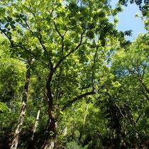 新緑の木漏れ日で明るい