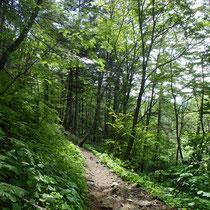 日の光で森の緑が美しかったです☆