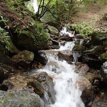 サケビ谷のトラスト木はこの滝の上に多かった