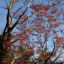 下山してくると紅葉も見られた