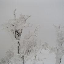 お目当ての樹氷は見られたが…