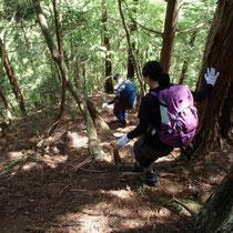 巨木群生地帯が終わり、さらに尾根を下ります