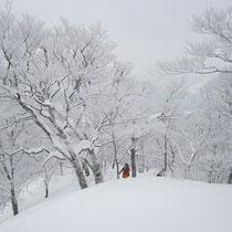 雪を被ったブナ林はきれいです。